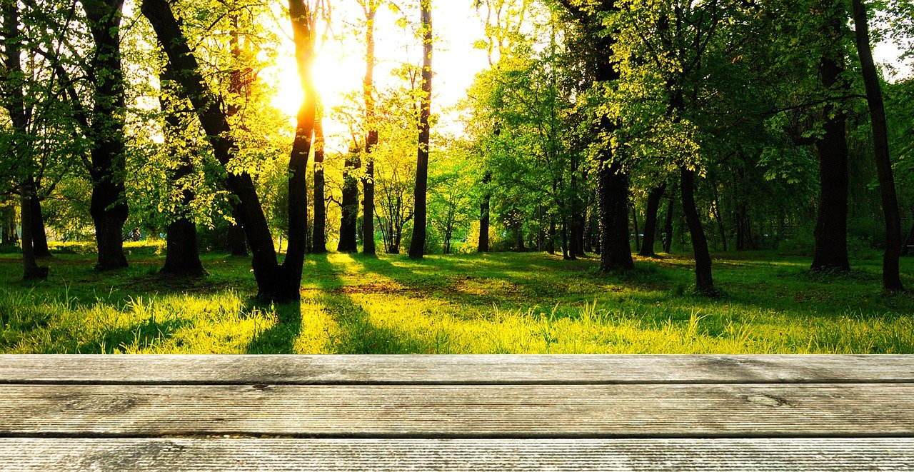 background, wood, forest